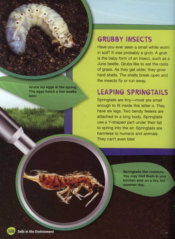 Creepy Crawly Critters